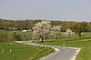 Kirschbäume im Frühjahr, Hagen, Deutschland | Stock Foto