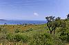 Cap Camaret, Ramatuelle, Landschaft mit alten Bäumen | Stock Foto