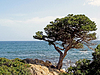 ID 4152401 | Kiefer am Meer, San Teodoro, Gallura, Sardinien | Foto mit hoher Auflösung | CLIPARTO