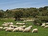 ID 4152468 | Stado owiec w pobliżu Gennamari, Sardynia, Włochy | Foto stockowe wysokiej rozdzielczości | KLIPARTO
