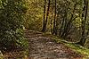 Bad Iburg, Buchenwald am Kurpark im Herbst, | Stock Foto