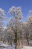 Baum mit Rauhreif im Winter, Kurpark w Bad Laer, | Stock Foto