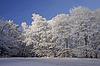 Bäume im Winter mit Rauhreif, Herrenrest, | Stock Foto