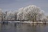 Bäume mit Teichlandschaft im Winter, Bad Laer, | Stock Foto