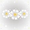 Trzy kwiaty stokrotki. | Stock Vector Graphics