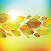 Jesień kolorowe liście. | Stock Vector Graphics