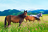 Three horses on meadow | Stock Foto