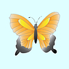 farbige Schmetterling