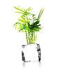 ID 4342098 | Eine Pflanze aus einem Eiswürfel mit weißem Hintergrund wachsenden | Foto mit hoher Auflösung | CLIPARTO
