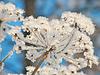 Клауса и снежинки | Фото