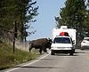 ID 4379156 | Bison auf der Strecke, Yellowstone-Nationalpark | Foto mit hoher Auflösung | CLIPARTO