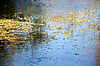 Jesienne liście na wodzie | Stock Foto