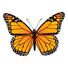 Monarch Butterfly | Stock Vector Graphics
