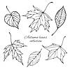 Векторный клипарт: Набор контурных осенних листьев