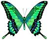 Piękny motyl niebieski zielony   Stock Vector Graphics