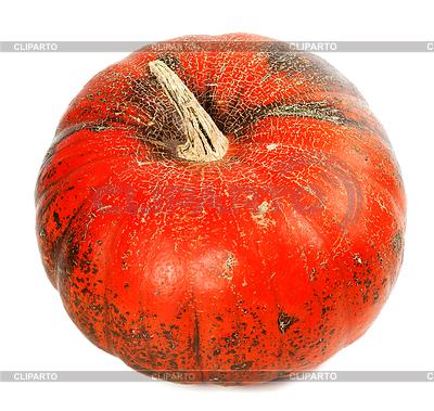 Red reif Kürbis | Foto mit hoher Auflösung |ID 4514908