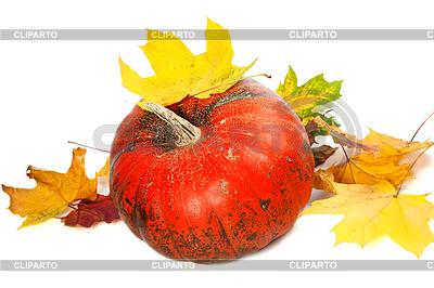 红熟南瓜和红叶 | 高分辨率照片 |ID 4514910