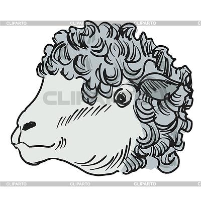 Concepto de ganado ovino