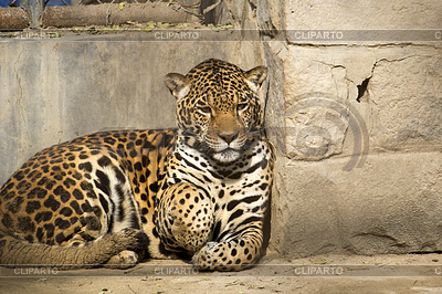 Jaguar | Foto mit hoher Auflösung |ID 4187368