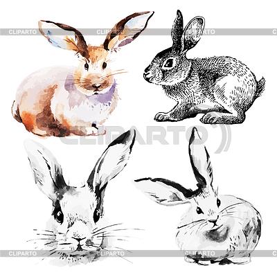 кролик картинка нарисованная