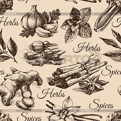 Nahtlose Muster der Küchenkräuter und Gewürze. Skizze | Stock Vektorgrafik |ID 4298336