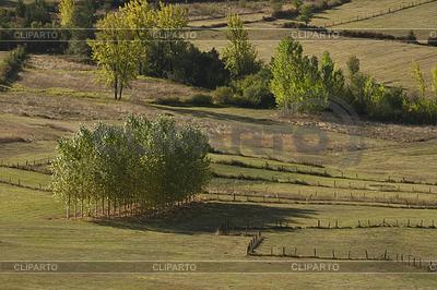 Drzew na prerii | Foto stockowe wysokiej rozdzielczości |ID 4182568