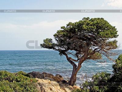 Pine by the sea, San Teodoro, Gallura, Sardinia, Italy | Foto stockowe wysokiej rozdzielczości |ID 4152401