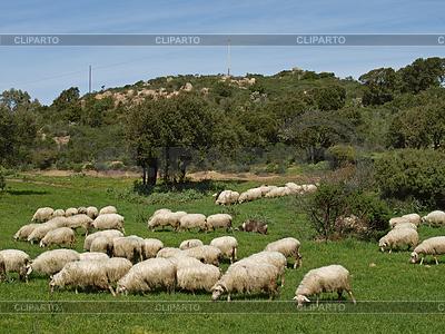 Stado owiec w pobliżu Gennamari, Sardynia, Włochy | Foto stockowe wysokiej rozdzielczości |ID 4152468