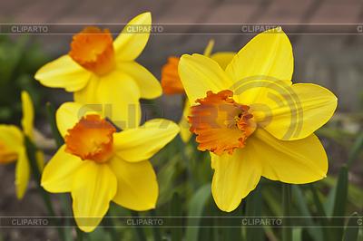 Фото цветы в вазе на зеленом фоне 28