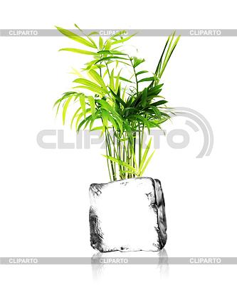 Eine Pflanze aus einem Eiswürfel mit weißem Hintergrund wachsenden | Foto mit hoher Auflösung |ID 4342098