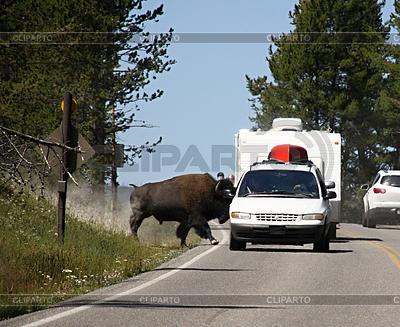 Bison auf der Strecke, Yellowstone-Nationalpark | Foto mit hoher Auflösung |ID 4379156