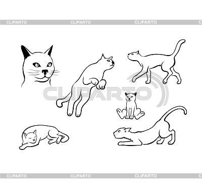 Katzen setzen | Foto mit hoher Auflösung |ID 4421878